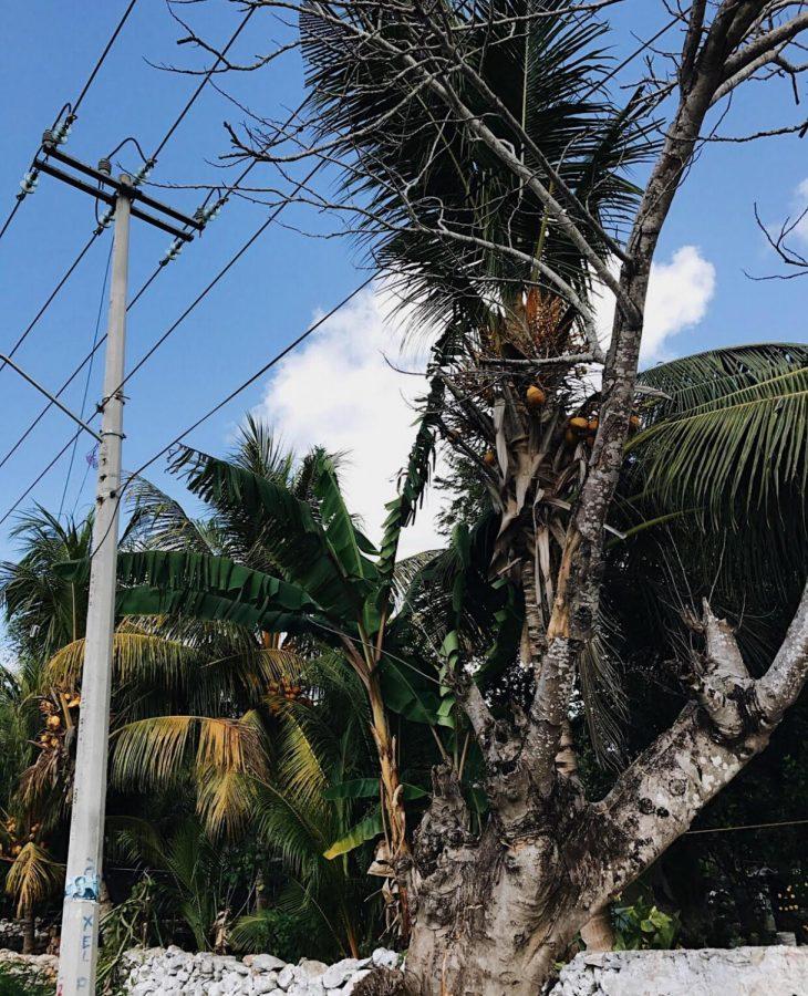 Yucatan+Peninsula%2C+Mexico